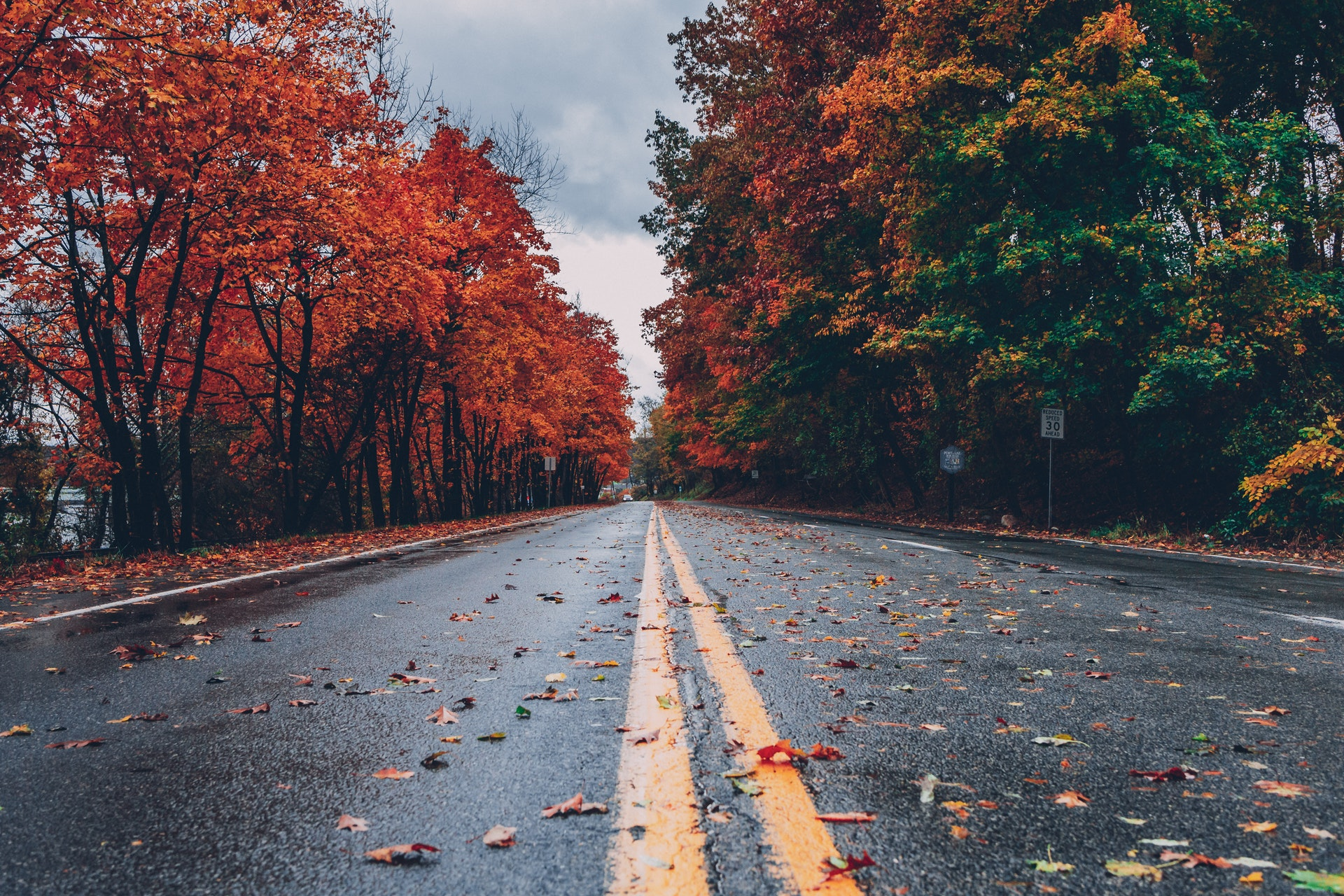 Wet road flanked by fall leaves on trees.